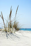 Beach scene with wild grass on the front and the sea in the back. Ground in Sardinia royalty free stock image