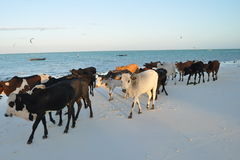Beach scene in Zanzibar Stock Photo