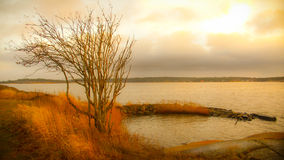 Beach scenery. With a tree and distant land Stock Photography