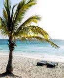 Beach Scenes Royalty Free Stock Image