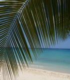 Beach Scenin in Barbados, West Indies Stock Image