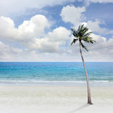 Beach sea. And coconut plam tree royalty free stock photo