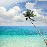 Beach sea. And coconut plam tree stock image