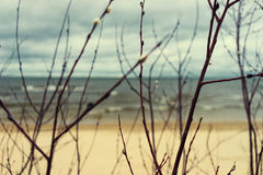 Beach and sea through the branches of willow spring Royalty Free Stock Photo