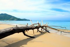 Beach and sea. Old Timber and the Beautiful beach on Phuket island in Thailand royalty free stock images