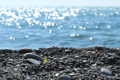Beach by the sea. Rocky beach by the sea, clear clear sea water shines in the rays of the sun Stock Photography