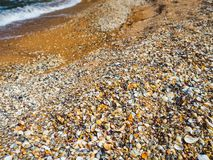 The beach on the sea of seashells. Background of seashells stock photos