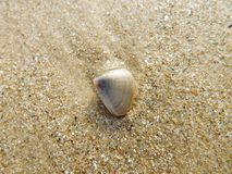Beach and Sea shell. In Thailand Stock Photo