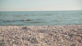 Beach sea shells. Sea calm, sunny weather, sandy shore, sea shells on the sea shore, sea water, tranquil idyllic scene of a golden sunset over the sea, waves stock video footage