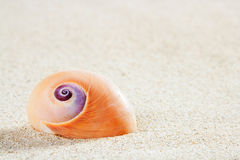 Beach sea snail tropical white sand closeup macro Royalty Free Stock Photography
