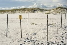 Endangered Sea Turtle Nest Protection at Florida Beach royalty free stock photo