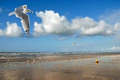 Beach and seagull Royalty Free Stock Photography