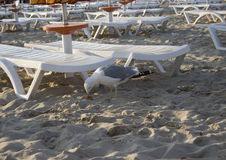 The beach with a seagull Royalty Free Stock Photo
