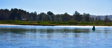 Beach with Seagulls and Buoy Stock Photos