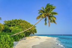 Beach and seascape view with palm tree on Maldives. Sand beach and seascape view with palm tree on Maldives Stock Photos
