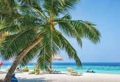Beach and seascape view with palm tree on Maldives. Sand beach and seascape view with palm tree on Maldives Stock Photography