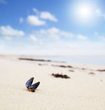 Beach with seashell Royalty Free Stock Images