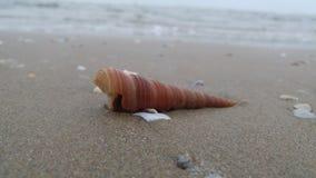 On the beach. Seashell on the beach in Thailand Royalty Free Stock Photo