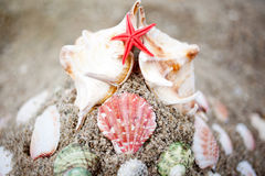 Beach with seashells. Closeup of some seashells on the sand of a beach royalty free stock photography