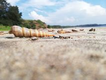 Beach seashells stock images