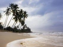 Beach seaside Palm tree Summer outdoor landscape Royalty Free Stock Photo
