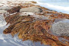 Beach with Seaweed  at Augusta Western Australia Stock Photo