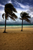 Beach seaweed and coastline in playa paradiso Royalty Free Stock Photography