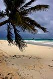 Beach seaweed and coastline in playa paradiso mexico Stock Image