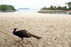 On the beach in Sentosa stock photo
