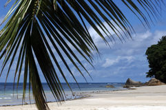 Beach on Seychelles Island. Beautiful white sand beach on Seychelles Island Royalty Free Stock Photo