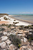 Beach at shark bay Stock Photo