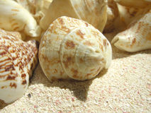 Beach shell Stock Photos
