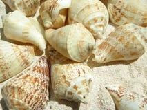 Beach shell stock photos
