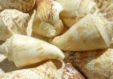 Beach shell stock photography