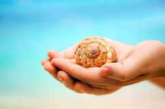 Beach shell Royalty Free Stock Image