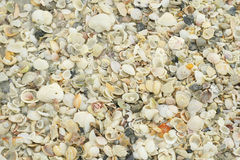 Beach shell background Stock Image