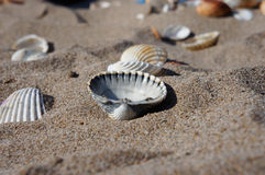 Beach Shell Stock Images