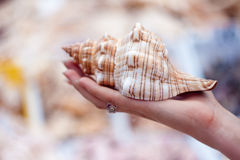 Beach shell held in hand Royalty Free Stock Image
