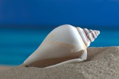 Beach_shell_sea Royalty Free Stock Images