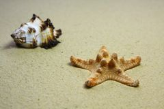 Beach shell and starfish. On a sandy beach Stock Photography