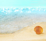 Beach with shell. Tropical beach and splashing waves Stock Image
