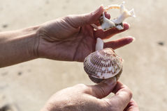 Beach Shell Stock Image