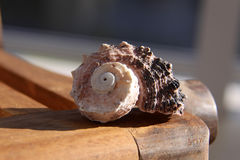 Beach Shell on wood Royalty Free Stock Photography