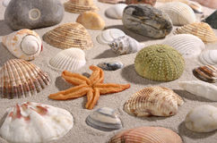 Beach with shellfisch and seafood Stock Images