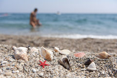 Beach with shells Stock Image