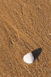 Beach and shells Stock Photos