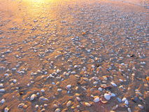 Beach And The Shells Royalty Free Stock Image