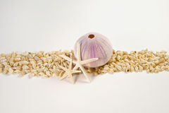 Free Beach Shells And Starfish Border Royalty Free Stock Photo - 15252195