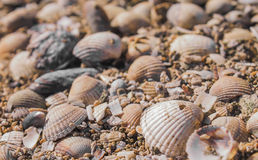 Beach Shells. Close up image of some shells Stock Photography