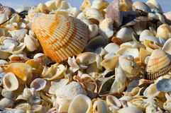 Beach shells of color. Hundreds of colorful beach shells piled high Royalty Free Stock Photo